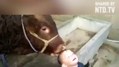 소와 아이의 교감