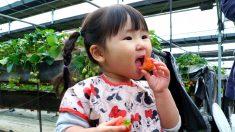 258회 딸기에 취하다! – 봄날, 딸기의 향연과 함께 하세요!