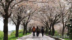 구포의 봄