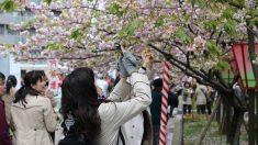 일본 사람의 장수 비결