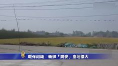 [禁聞] 허난 북부 신샹市에 카드뮴 밀 경작 면적 증가 중