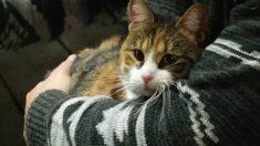 칠레의 고양이 카페, 커피 즐기며 입양 고양이 물색