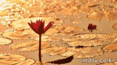 연화(蓮花)