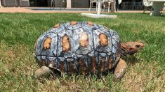 멋진 등껍질을 얻고 새 삶을 살게된 거북이