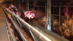 살충제 계란 6곳으로 늘어..08마리, 08LSH, 09지현, 09신선농장, 11시온, 13정화 피하세요