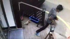 길고양이 살해범 벌금형..알코올 중독상태 참작