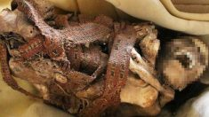 청소부가 길거리 상자 안의 시체발견, 900년 된 페루인!