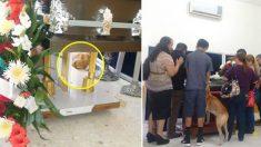 실종되었던 개, 주인 장례식에 나타나 작별인사 하다