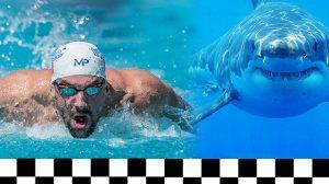 올림픽 황제 펠프스와 백상어가 맞붙는다면?