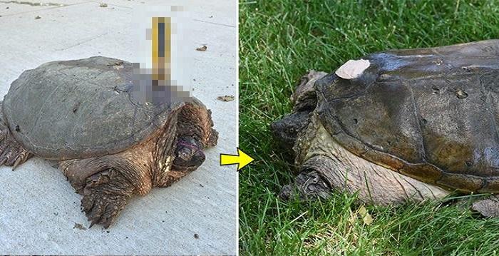 잔인한 동물학대-거북이 등에 꽂힌 드라이버