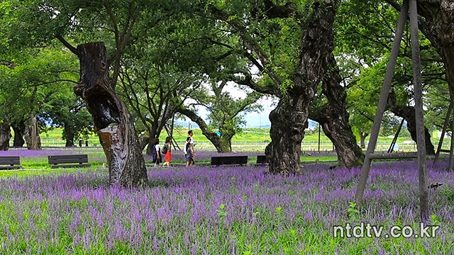 [영상] 성주 성문밖 숲길