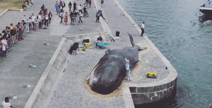 프랑스 센 강에 대형 고래가 나타났다!!