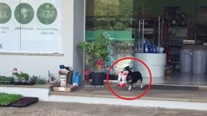 """""""제 먹이는 제가 삽니다""""-혼자 쇼핑하는 똑똑한 강아지(영상)"""