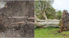 나무가 쓰러지고 알게 된 소름끼치는 사실