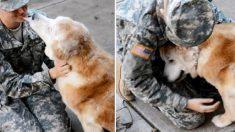3개월 보름간 떨어졌던 노쇠한 개와 여군의 애틋한 재회