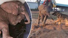 왕따 당한 아기 코끼리의 친구는?