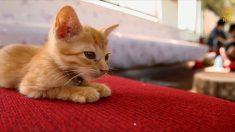 [영상] 고양이와의 즐거운 데이트, 日고양이 카페 기차 등장