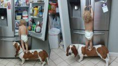1살 꼬마와 강아지가 환상적인 호흡으로 냉장고를 열다