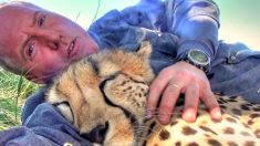 치타를 베개 삼은 남성, 큰 고양이들의 부비적 감당 못 해(영상)