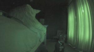 알람시계 반려견 vs 더 자고 싶은 주인, 승자는?