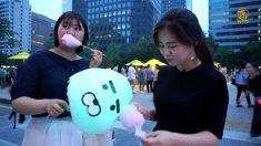 [헬로우 코리아] 270회-1 청계천 '밤도깨비 야시장'으로 놀러오세요~