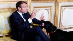 [영상] 프랑스 마크롱대통령 반려견.. 잠깐 '실례'합니다.