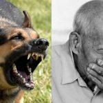 외출하려는데 키우던 개가 다리를 물어 당겼다. 때려도 소용이 없었다……무시하고 외출하다가 목숨을 잃을 뻔 했다.