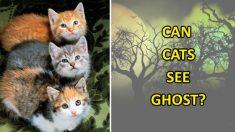 고양이가 유령을 보듯 허공을 멍하니 본다고요?