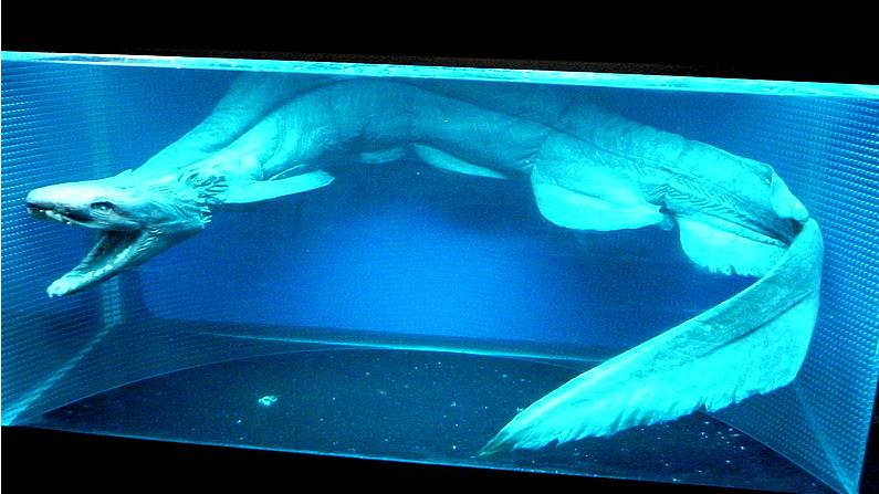 300개의 이빨을 가진 선사 시대 주름상어