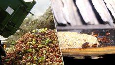 중국에서 음식물 쓰레기를 '이것'의 사료로 쓰는 이유