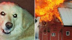 새끼를 잃고 슬픔에 빠진 개, 8마리 고아 강아지를 돌보다