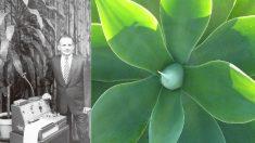 """""""거짓말까지 구분한다"""" 식물의 놀라운 인지능력"""
