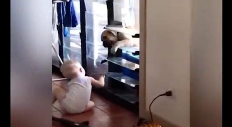 강아지야! 들어와… 똑똑한 아기가 집안으로 강아지를 들어오게 하는 방법 (영상)
