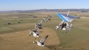 새들과 함께하는 인간 철새의 등장!