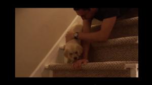 한 발, 한 발, 천천히! 난생처음 계단을 내려가는 강아지