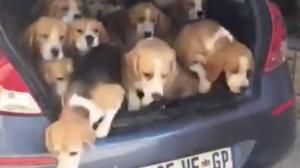 '심장 폭행하러 왔어요' 트렁크에서 쏟아져 나오는 강아지들