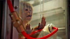 독일, 원숭이·인간 대상 '배기가스 실험' 파장