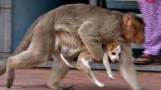 원숭이와 강아지, '이색' 모자지간