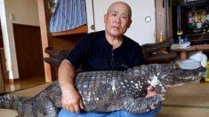 34년간 악어 '카이만'과 함께한 별난 '동물 사랑'