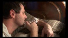 장난스러운 '몸짓'으로 주인과 노는 고양이