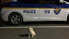 경기도 시흥경찰서의 경찰이 된 아기 강아지