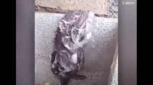 엉덩이까지 꼼꼼하게 비누칠하는 '쥐', 똑똑해서 황당한 영상 18선