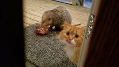 '쥐'한테 먹이 뺏긴 '고양이' 표정
