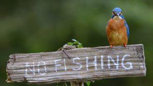눈과 마음이 정화되는 '물총새의 물고기 낚시'