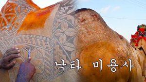 낙타의 털을 예술 작품으로 승화하는 '낙타 이발사'