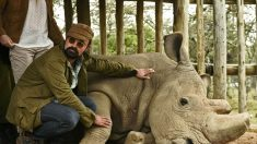 마지막 수컷 북부흰코뿔소 숨거둬..'지구 대멸종기' 신호탄