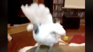 '나는 예쁜 새' 노래 구절에 맞춰 흥이 폭발한 춤을 추는 새