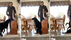 '음식 못 삼키는 병', 개를 위한 특별 선물 (영상)