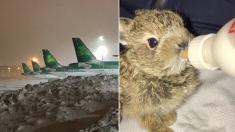 공항 경찰관, 눈 속에서 구한  '너무~ 귀여운' 아기 토끼(영상)
