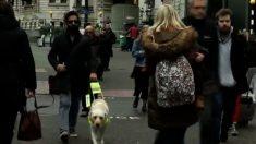 장애인과 안내견의 아픔, 세상 사람들은 싸늘하다 (영상)